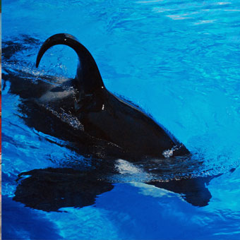 Time For SeaWorld to Start Telling the Truth