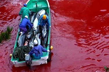 Sign the Petition to Japanese Prime Minister Abe and Taiji Mayor Sangen