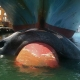 Ship Strikes endanger blue whales
